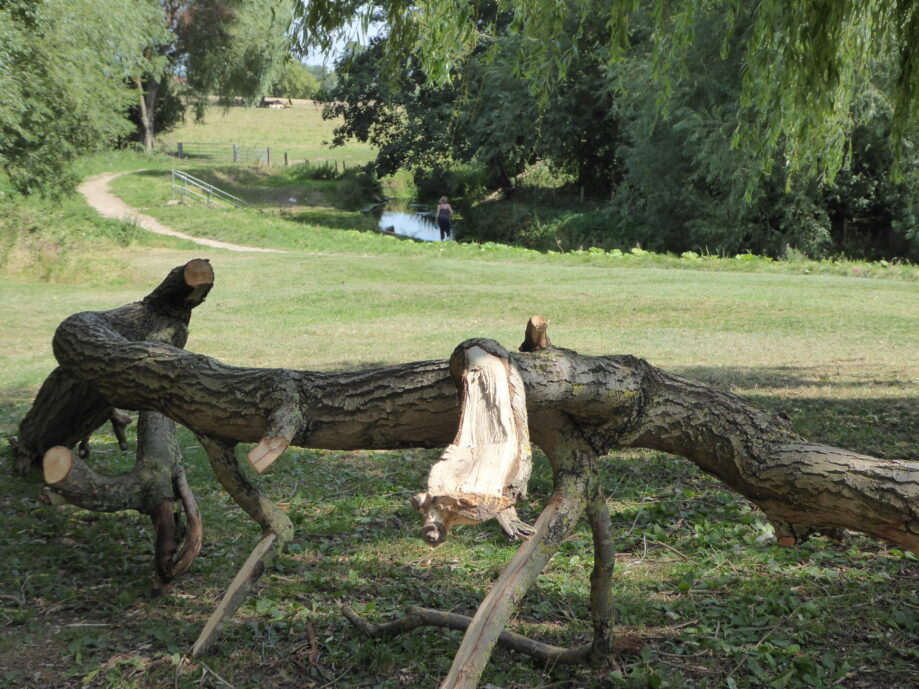 Foss-side arboreal sculpture